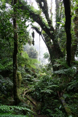 Misty Forest on Mahe island Seychelles- photo courtesy of N Doak